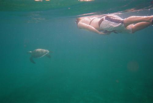 Turtle Chasing, Buck Island, St. Thomas